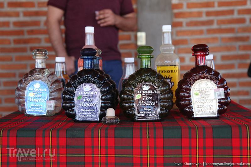 Мексика. Гвадалахара - Текила / Фото из Мексики