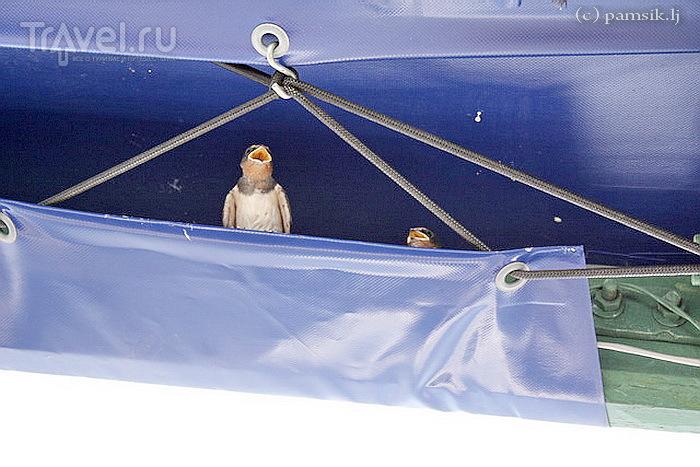 Калининград. Музей Мирового Океана на набережной Петра Великого, река Прегель / Россия