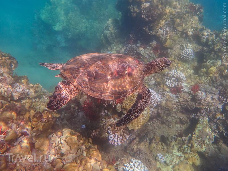 Гавайи. Мауи. Wailea / Фото из США