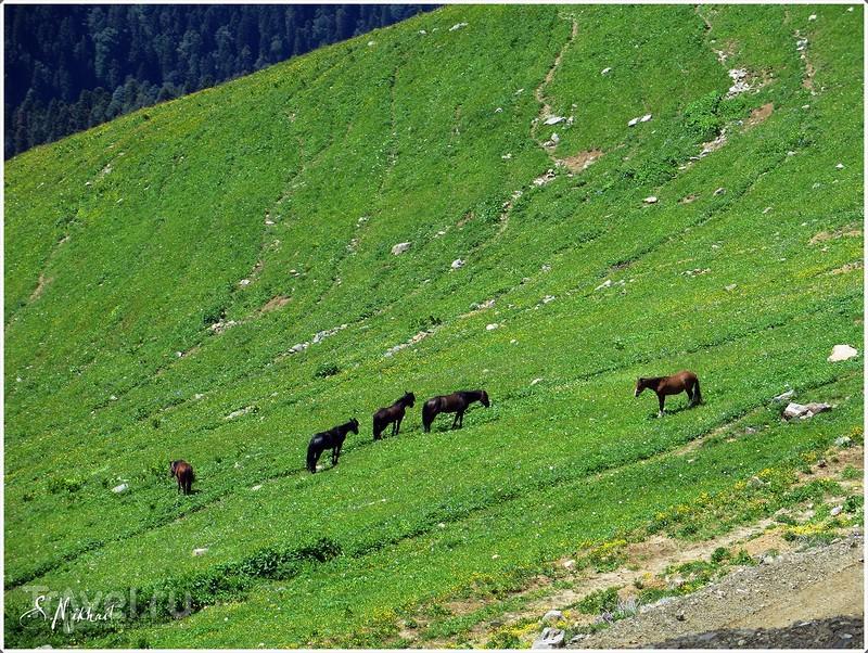 Красная поляна / Фото из России