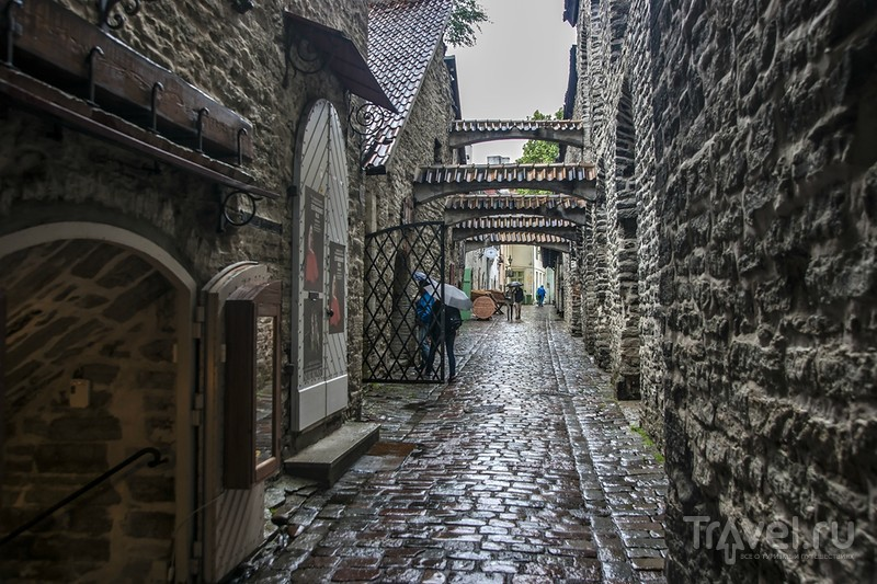 Мастера улицы Святой Екатерины / Эстония