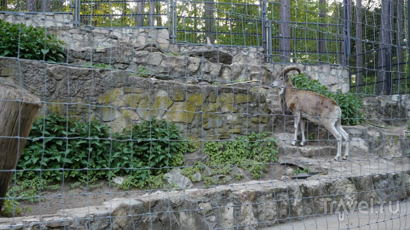 Прогулка по Рижскому Зоопарку / Латвия