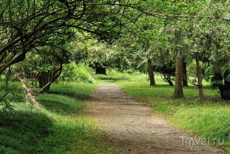 Прогулочные дорожки в Сухумском ботаническом саду / Россия
