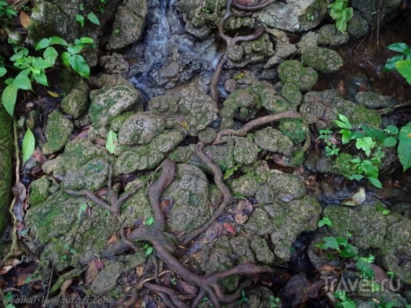 Mundo Maya. Гватемала. Семук Чампей / Фото из Гватемалы