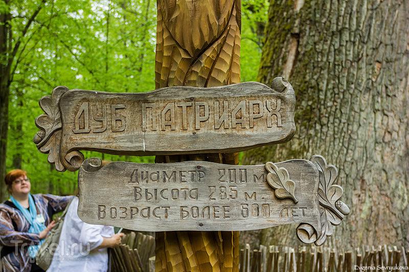 Майские праздники в Беларуси. Беловежская пуща / Фото из Белоруссии