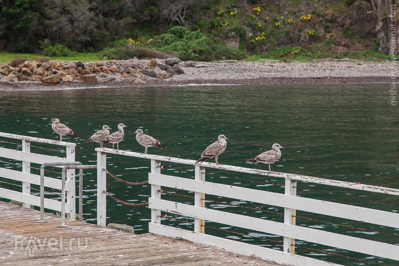 США. Национальный парк Channel Islands / Фото из США