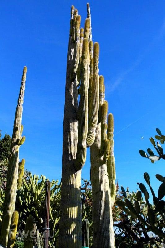 Монако - Ботанический сад экзотических растений / Монако