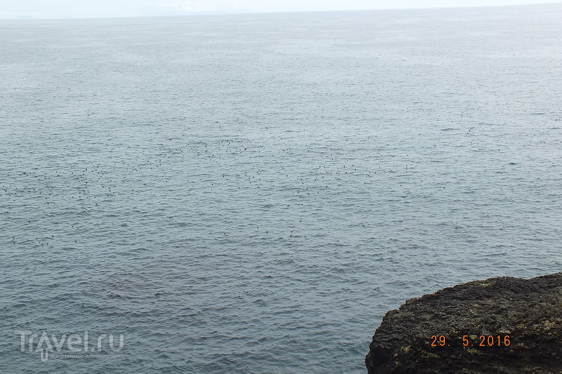 Фарерские острова. Остров Мичинес (Mykines) / Фарерские острова
