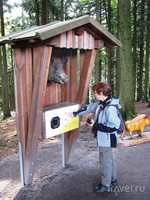 Что смотреть в Баварии - конечно, лес! / Германия
