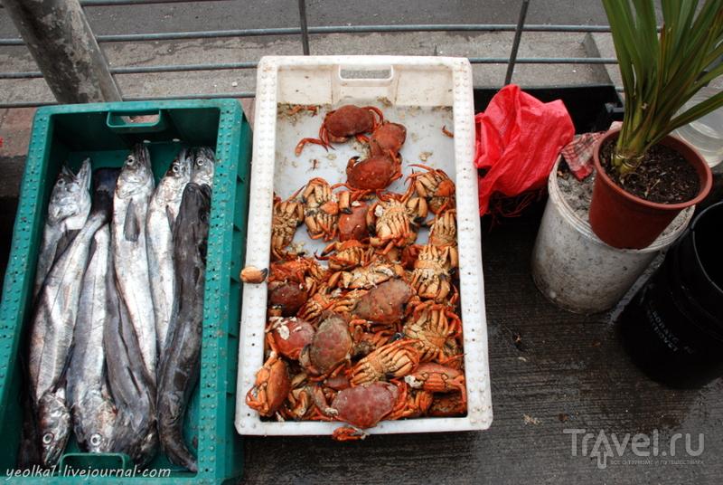 Чили - сбыча мечт! Край вулканов и озер. Рынок Анхельмо в Пуэрто Монт. Пикорокос - совершенная еда! / Фото из Чили