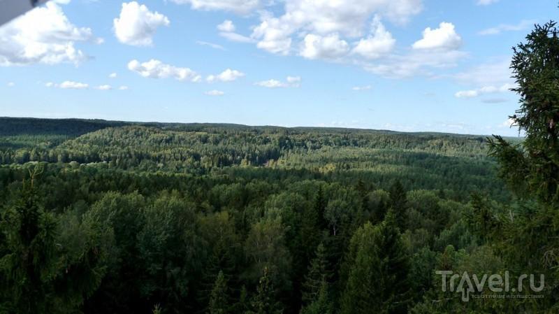 Природные тропы Лигатне / Латвия