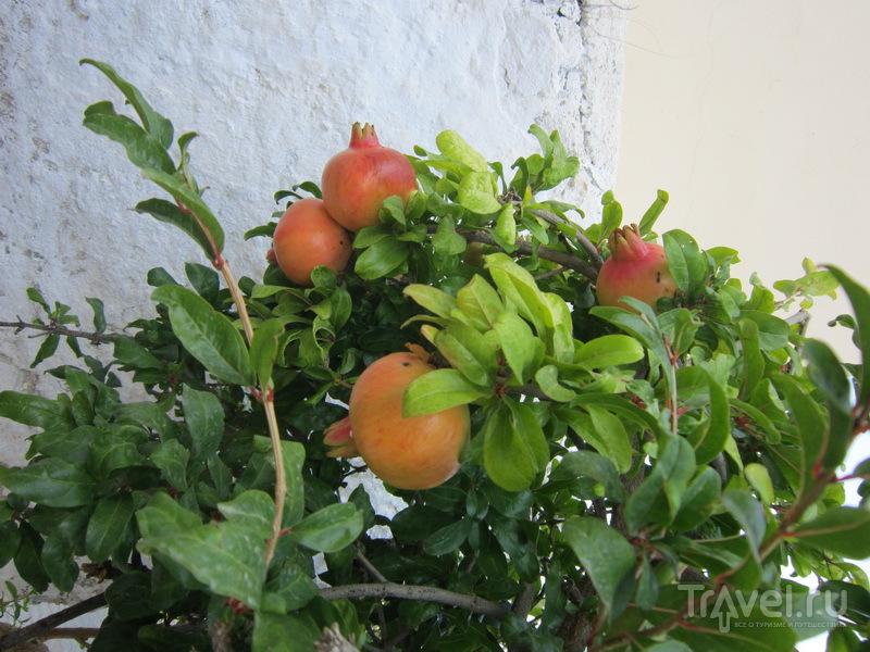 Гранатовое дерево / Греция