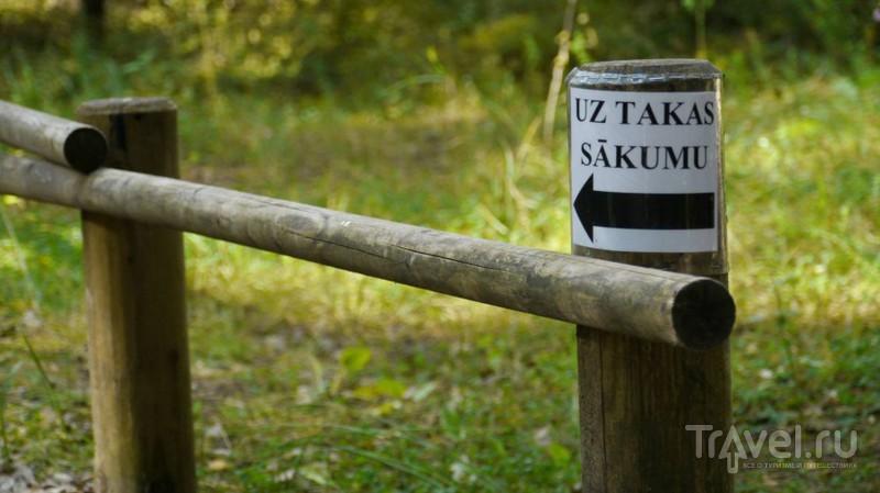 Большое Кемерское болото, Латвия / Фото из Латвии