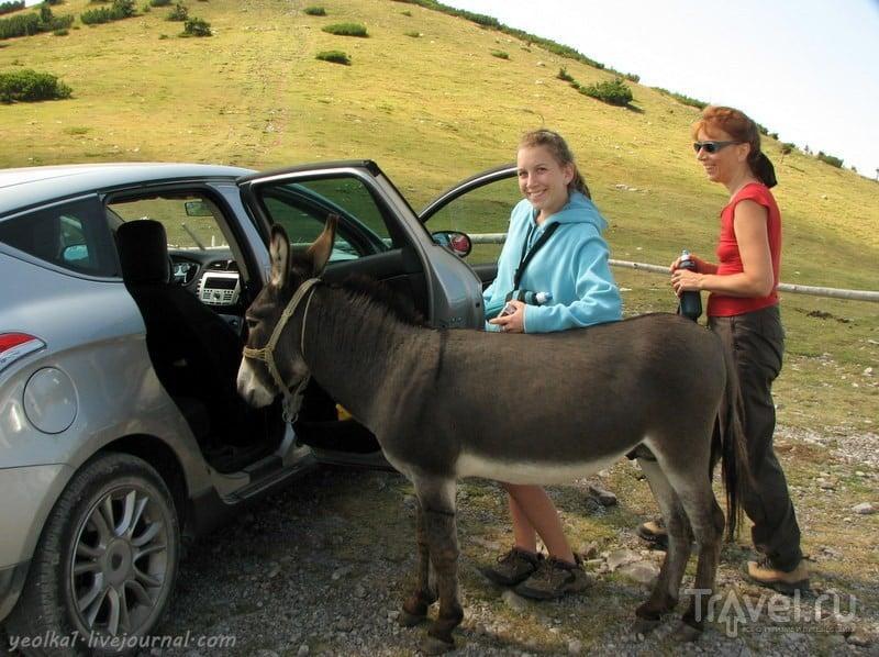 Словения - Хорватия без городов. Лошади в горах Северного Велебита / Фото из Хорватии