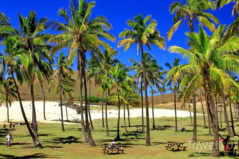 Красивый пляж Анакена! / Фото из Чили