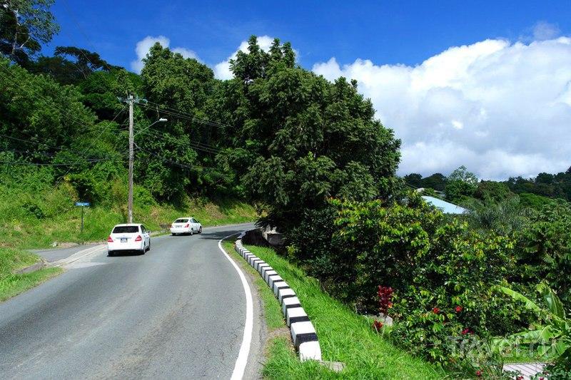 Прогулка по острову Тобаго, Тринидад и Тобаго / Тринидад и Тобаго