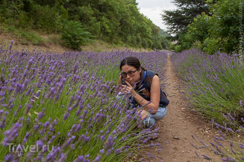 Путешествие по Провансу. Папы, деревни, охра и лаванда / Фото из Франции
