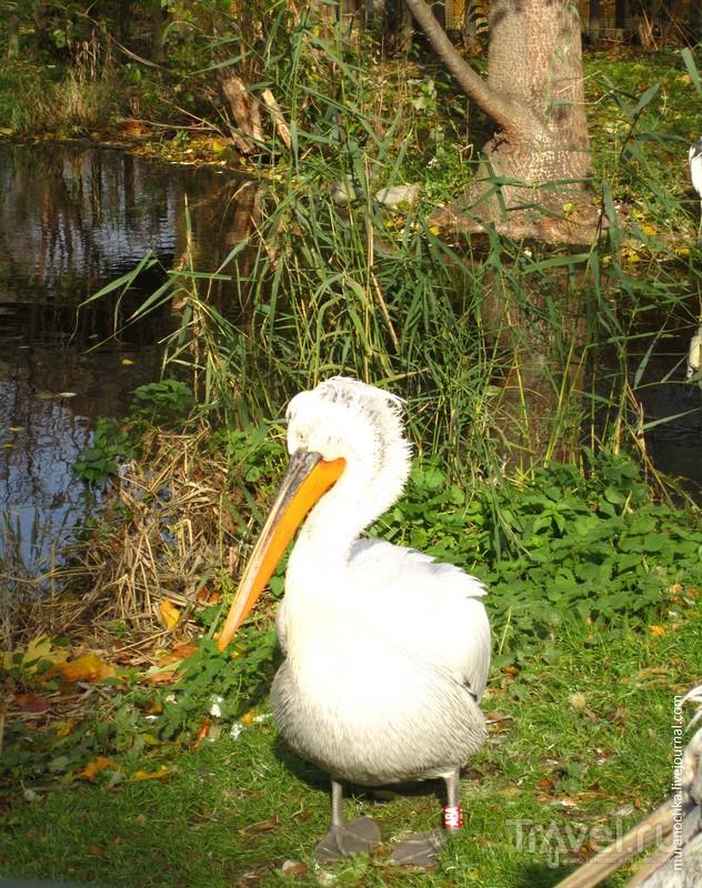 Золотая осень в Венском зоопарке / Фото из Австрии