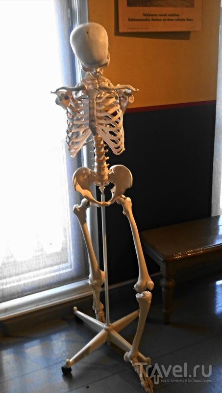 Наглядное пособие по анатомии