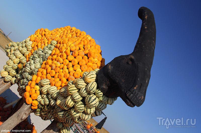 Оранжевое настроение Krewelshof'a / Фото из Германии