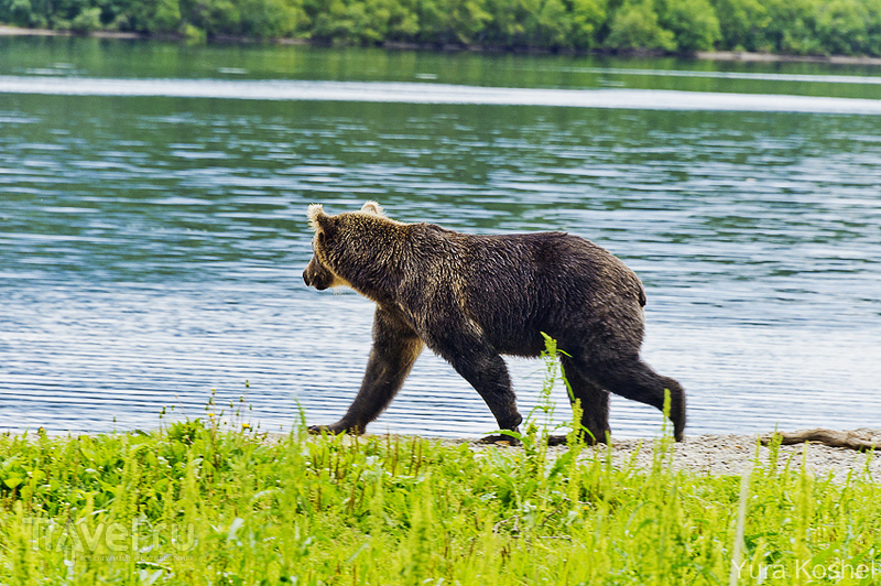 Камчатка. Курильское озеро / Фото из России