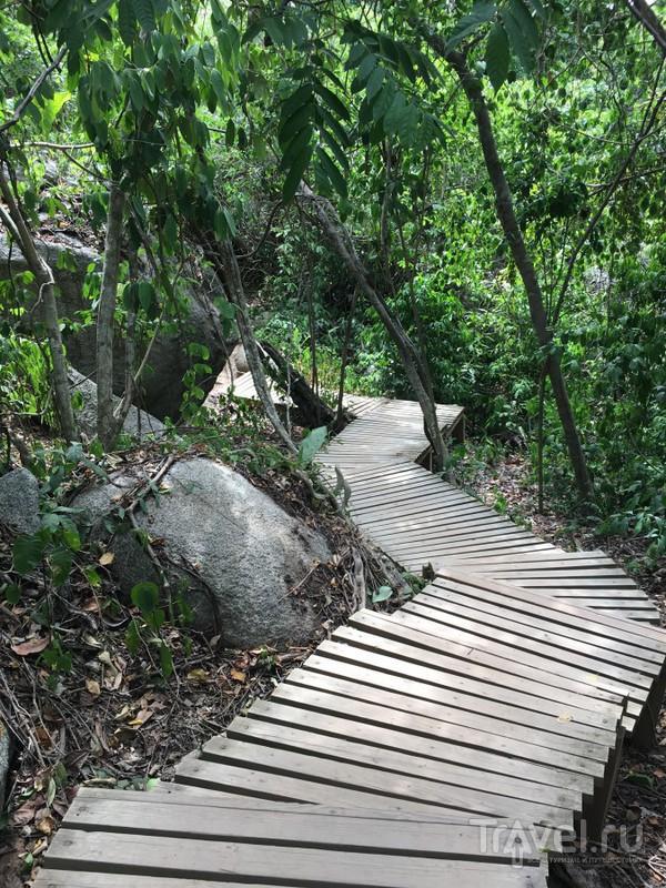Колумбия, путь через Болото в национальный парк Тайрона / Фото из Колумбии