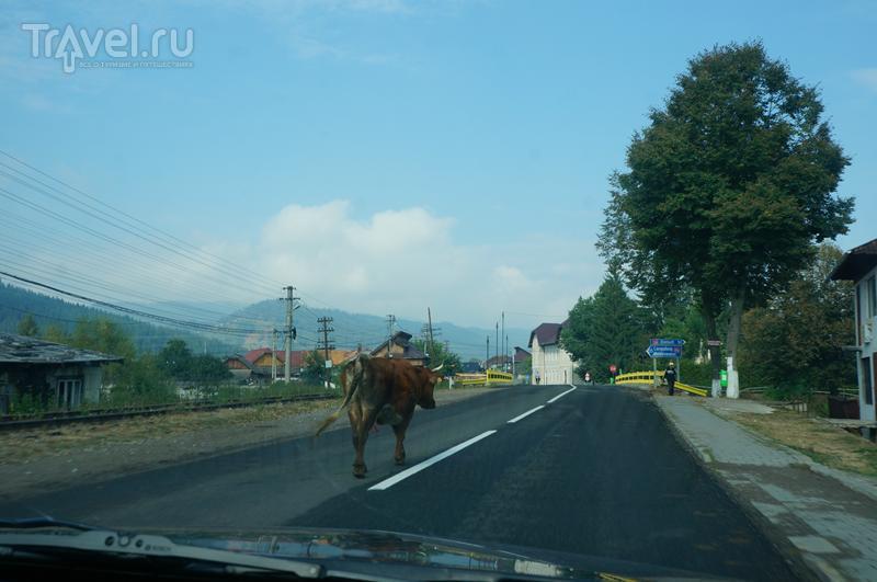 Как мы колесили по Балканам. Румыния / Румыния