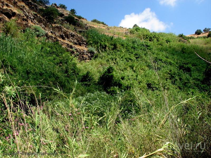 Незнакомый Израиль. Голанские высоты. Завитан - базальтовое царство. Нижний Завитан / Фото из Израиля