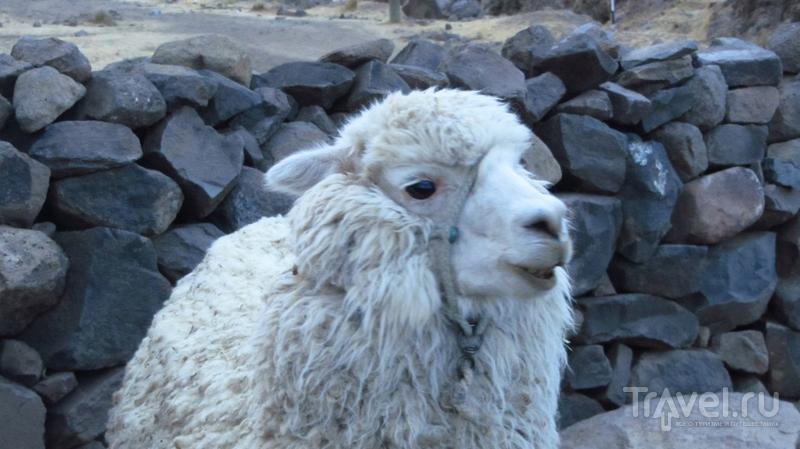 Перу. Плавучие острова на Титикаке и некрополь инков / Фото из Перу