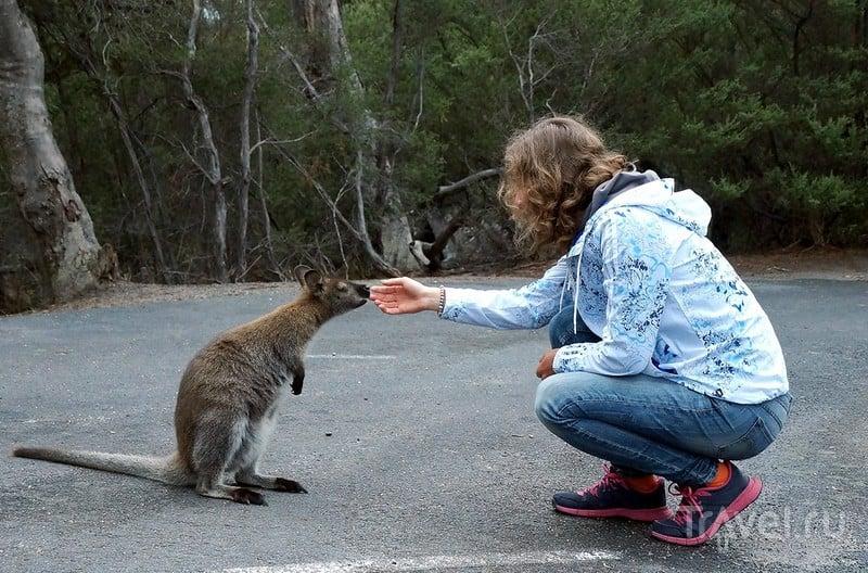 Австралия островная: Тасмания / Фото из Австралии