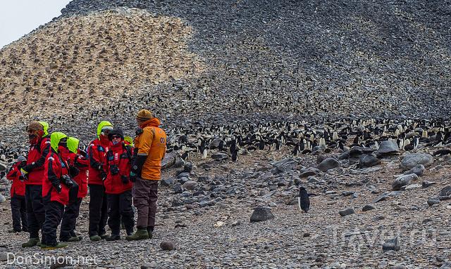 Антарктида / Фото из Антарктики