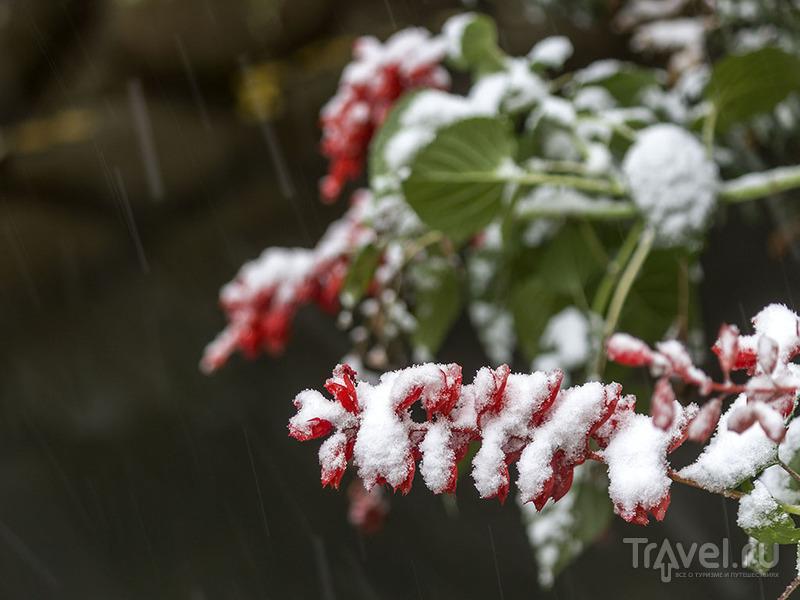 Душанбе в снегу / Таджикистан