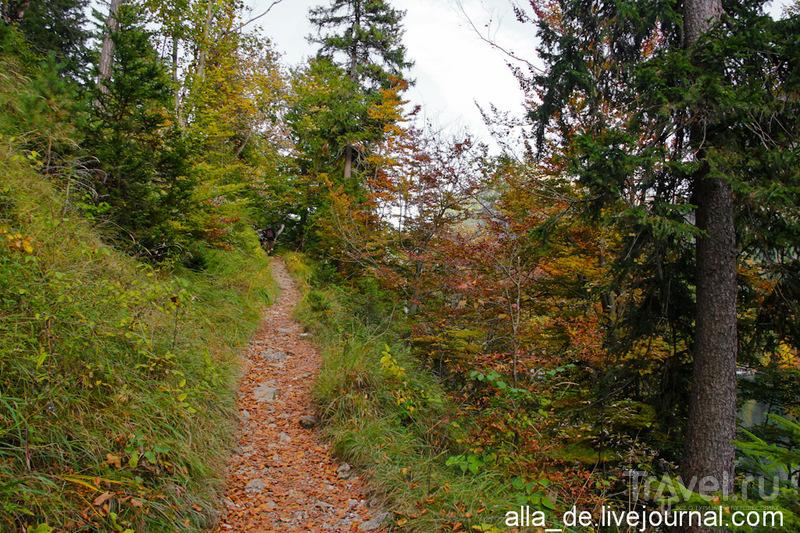 Осень на озере Alpsee / Германия