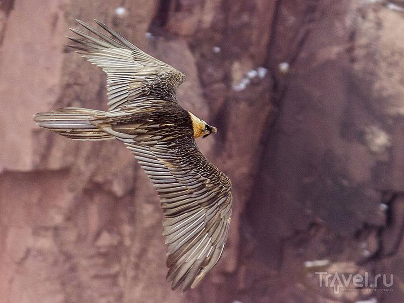 О птичках Таджикистана / Таджикистан