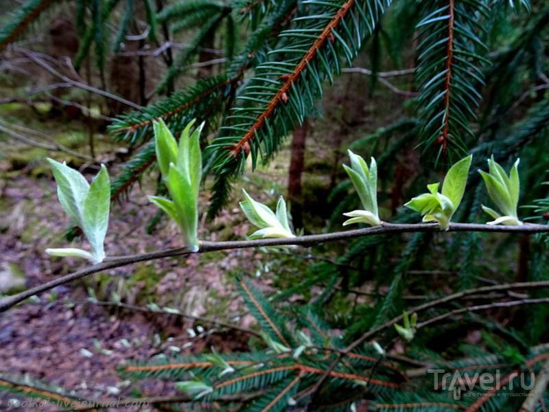 Весна в Апусени. Путешествие в Затерянный мир (Lumea Pierduta) / Фото из Румынии