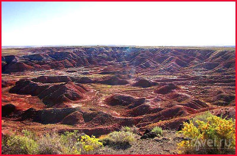 Аризона. Petrified Forest Park / Фото из США