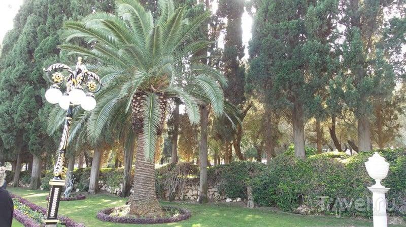 Самый зеленый город Израиля / Израиль