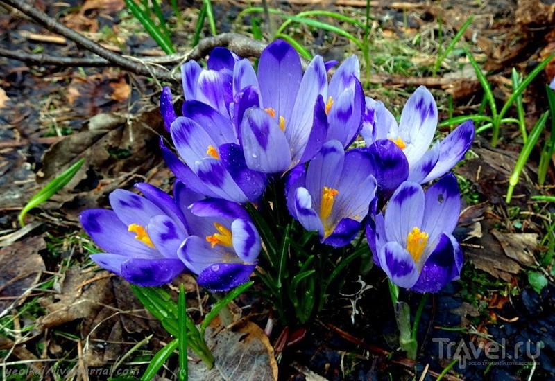 Весна в Апусени. Поход по плато Падис / Фото из Румынии