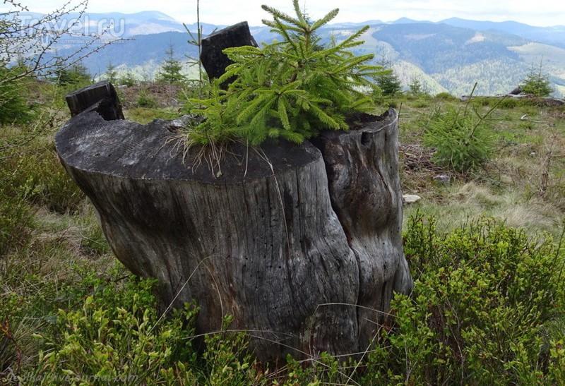 Groapa Ruginoasa - огромная рана в горе / Фото из Румынии