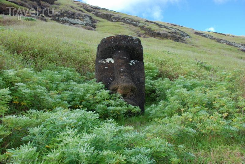 Остров Пасхи. Рано Рараку - внутри кратера / Фото из Чили