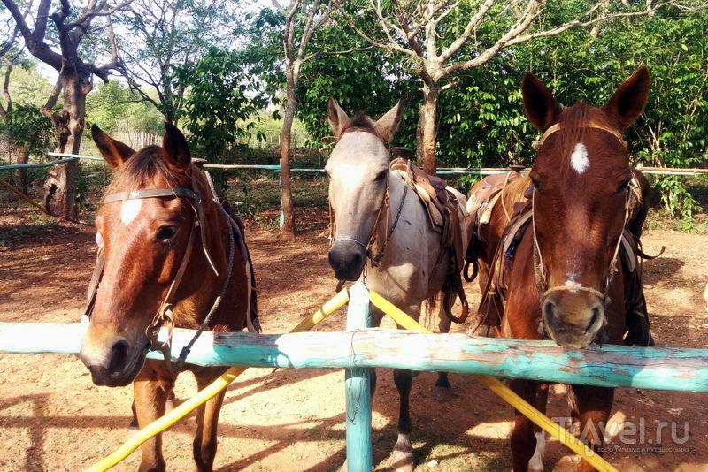 Лошади на кофейной плантации Ла Дионисия