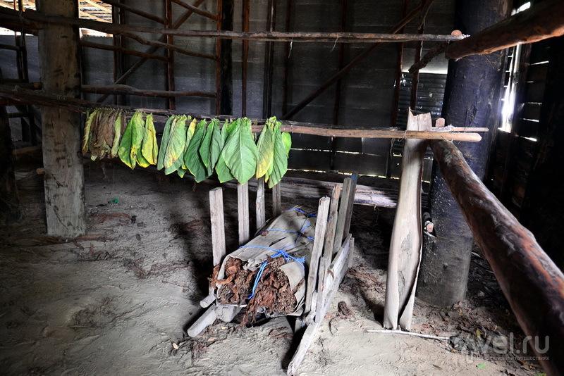 Сушение табачных листьев
