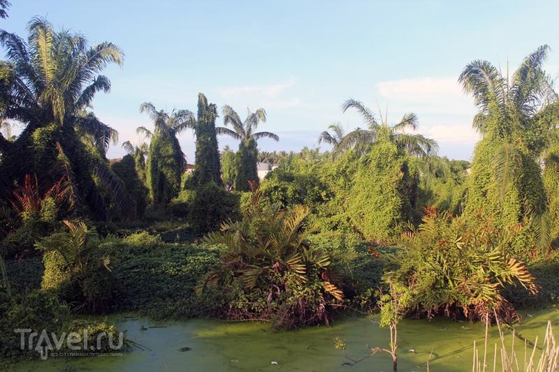 Куала-Селангор и парк светлячков / Малайзия