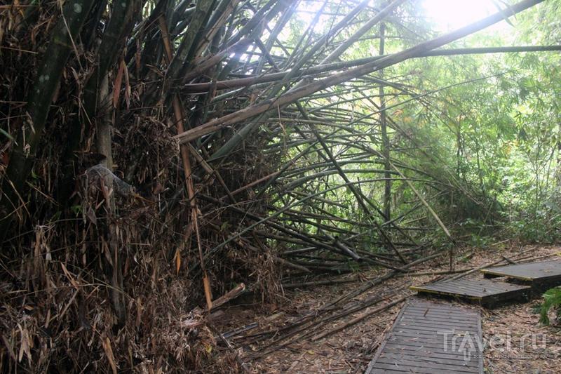 Малайзия: национальный парк Таман-Негара / Малайзия