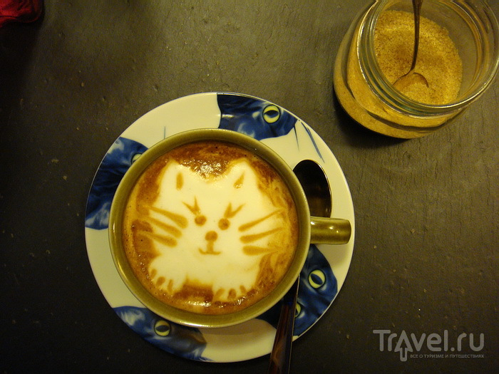 Кошачье кафе в Хельсинки / Финляндия