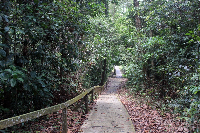 Борнео: пещеры Ниах / Малайзия