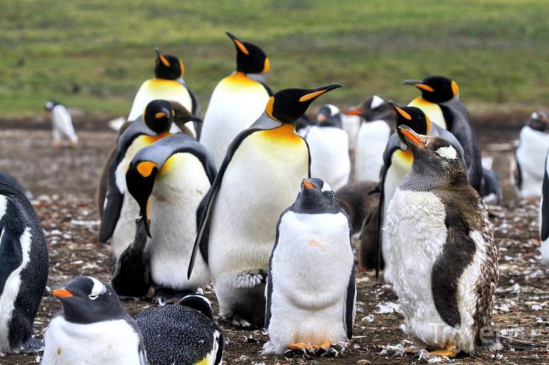 Джип-сафари на Фолклендах / Фото из Великобритании