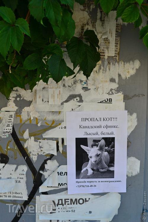 Крым. Евпатория. Август / Фото из России