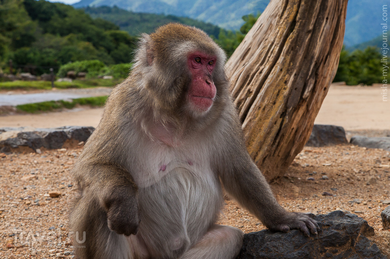 Киото. Бамбуковый лес и парк обезьян / Фото из Японии