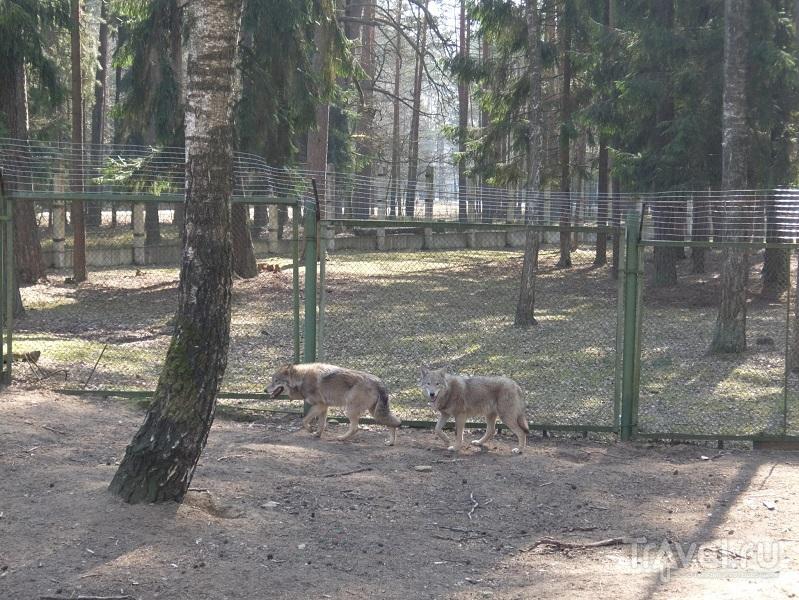 Беловежская пуща - место, которое будет сниться / Фото из Белоруссии